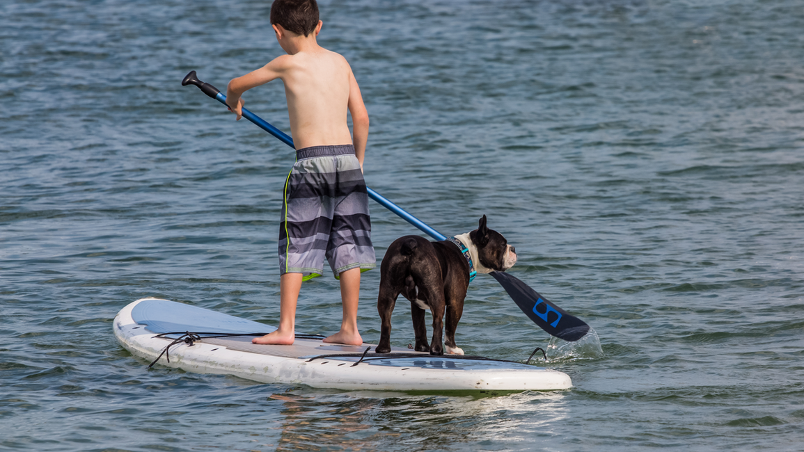 Enjoy the Outdoors with Fido From Pet Friendly Hotels in Kelowna