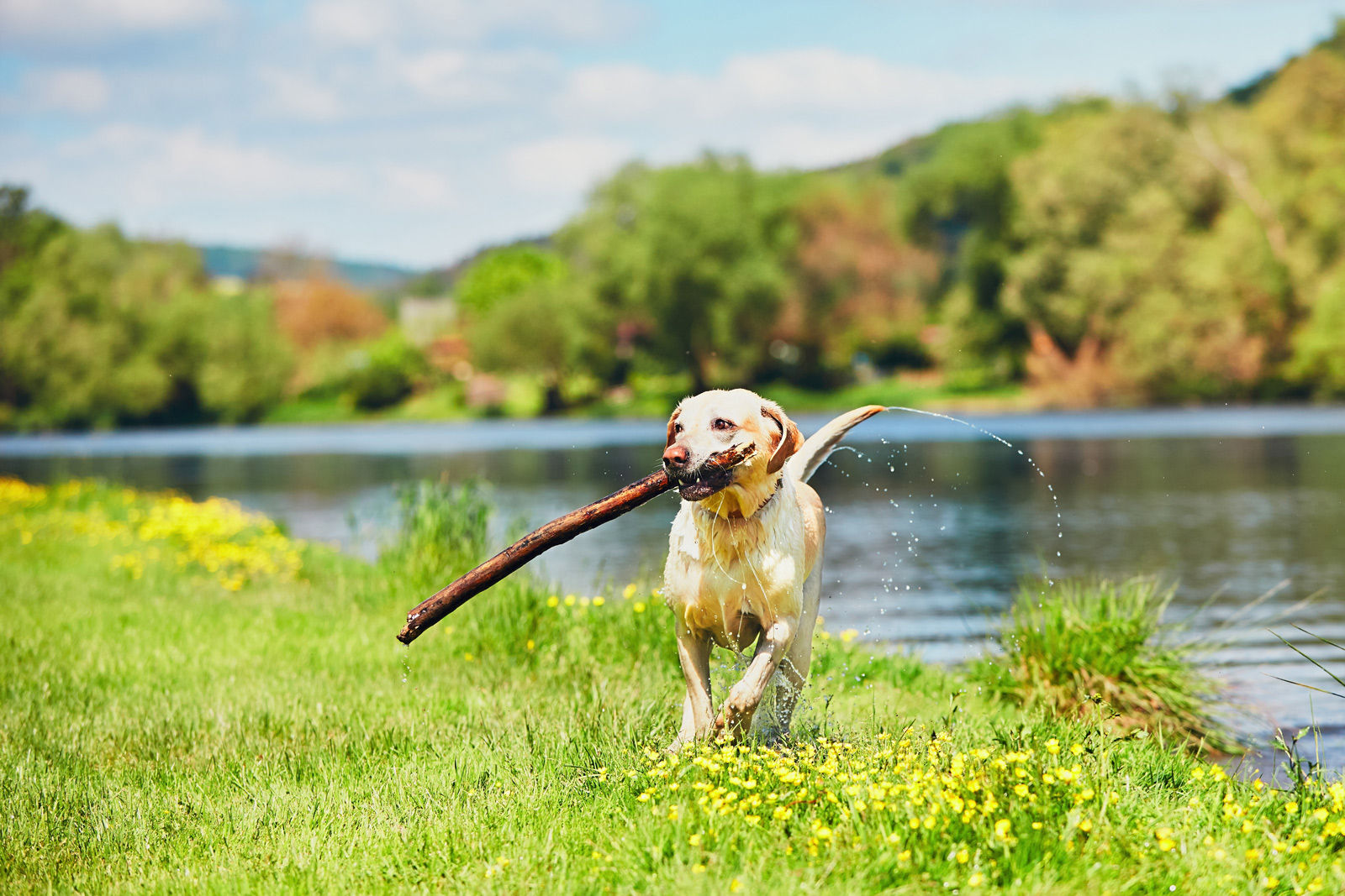 Let your dog run, fetch and play at one of the many dog parks located near Comfort Suites Kelowna pet-friendly hotel.