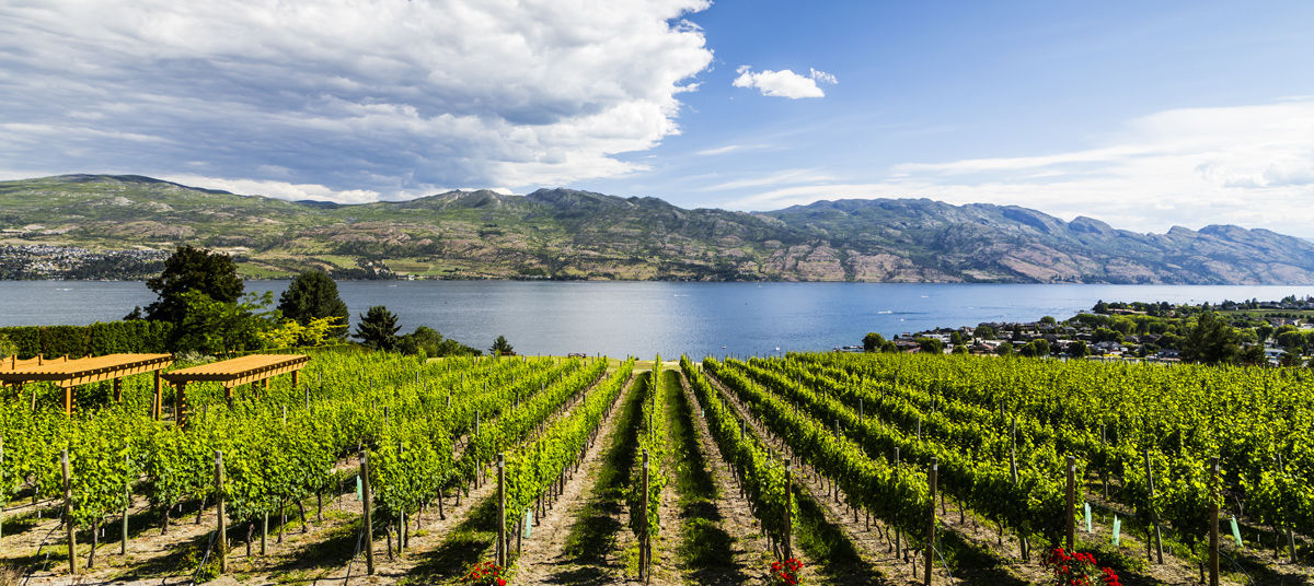Visit a vineyard with the many Okanagan Wine Festival spring and summer events and Okanagan wine tours available from Comfort Suites Kelowna hotel.